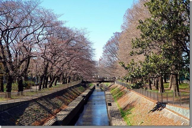 2019年 善福寺川緑地 桜 (東京都 杉並区)