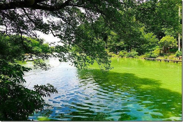 善福寺(ぜんぷくじ)公園(東京都 杉並区)