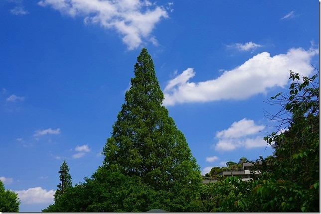 桃井原っぱ公園(東京都 杉並区)