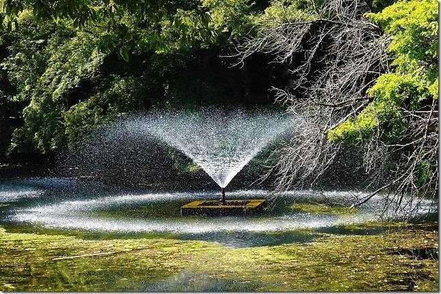 井の頭(いのがしら)公園(東京都 武蔵野市・三鷹市)